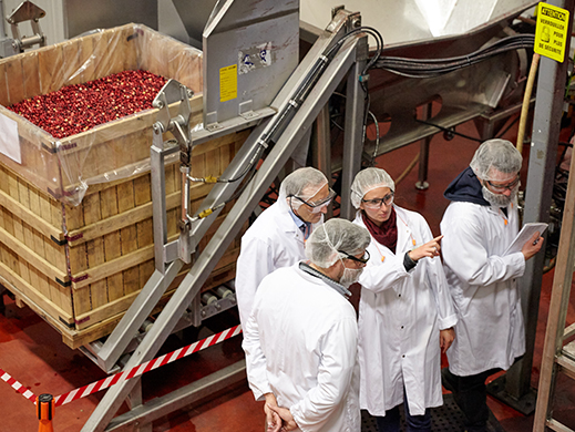 group of people controlling quality in a cranberry factory