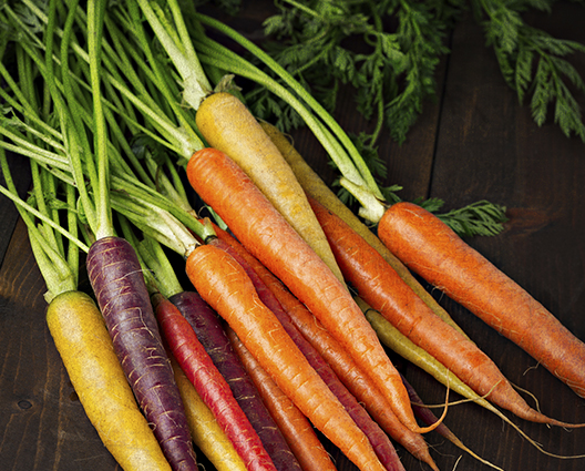 Bunch of freshly picked purple, orange and yellow carrots