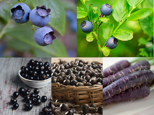 Antioxidants from acai, bilberry, blackcurrant, blueberry and purple carrot