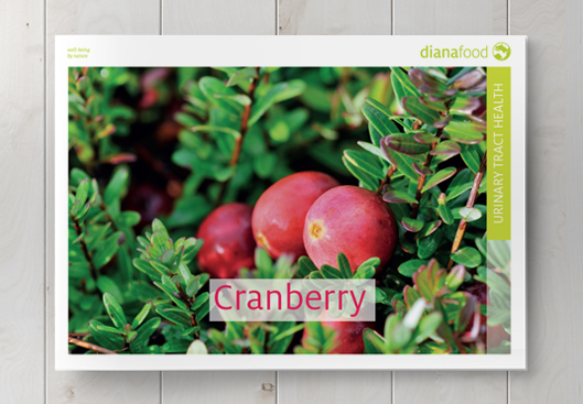 Top view of the Cranberry brochure on wooden table
